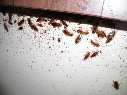 ゴキブリ 駆除