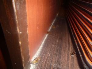 配膳カウンターにてチャバネゴキブリの生息確認