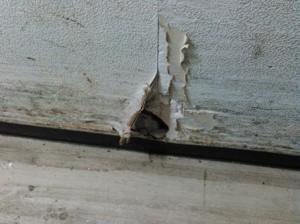 壁面にネズミの侵入経路の恐れがある破損箇所