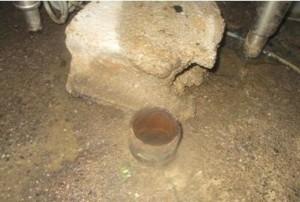未使用の排水口がネズミの侵入口に