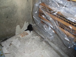B1食器倉庫 木製棚端部の侵入穴に閉塞処置