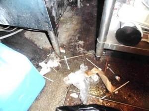 食器洗浄機下部にゴミが堆積チャバネゴキブリの生息場所