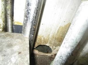壁面にネズミの侵入穴