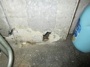 製氷機裏壁面にネズミの侵入口2